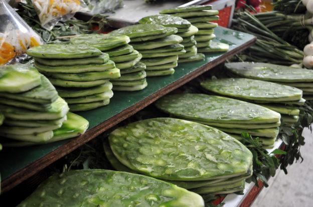 Manfaat Tanaman Kaktus Bagi Kesehatan