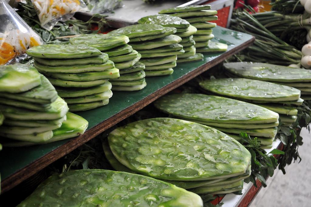 Manfaat Tanaman Kaktus Bagi Kesehatan post thumbnail image